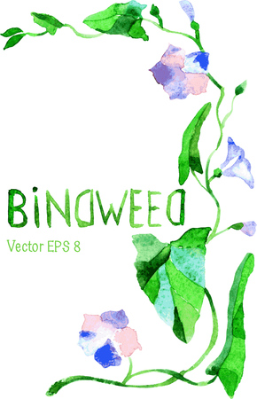 Germ of light purple bindweed. Young sprout strives bindweed with flowers up