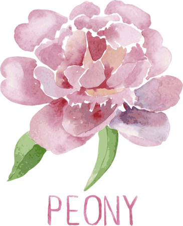 lush: Gorgeous pink peony flower. Watercolor illustration  lush flower on a white background Illustration