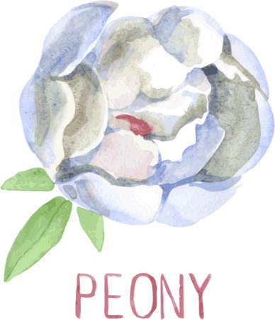lush: Gorgeous white peony flower. Watercolor illustration lush flower on a white background Illustration