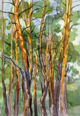 Pine forest watercolor landscape Stock Photo