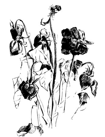 Black and white picture of dead dried flowers and buds