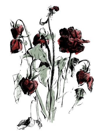 죽은 말린 꽃과 새싹 사진 일러스트