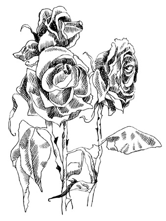 A drawing of dried roses. black and white picture