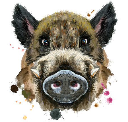 Watercolor portrait of wild boar