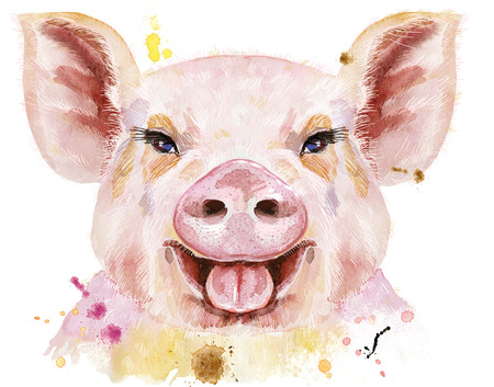Watercolor portrait of mini pig