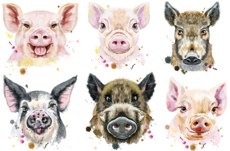 Cute pigs. Set of watercolor pigs for T-shirt graphics.