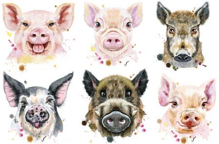 Schattige varkens. Set aquarel varkens voor T-shirt graphics.