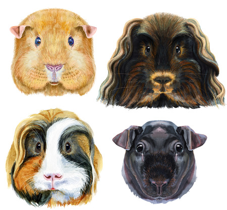 Guinea pigs for t-shirt graphics. Watercolor Skinny Guinea Pig illustration