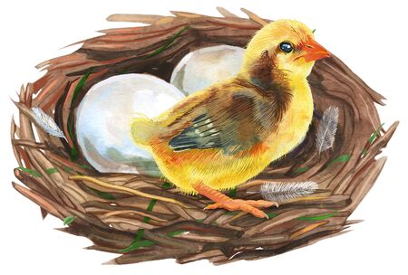 Nest with eggs and chicken. Painted with watercolors on white background. Spring decoration. Decorating for Easter.