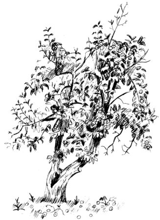 Vector monochrome hand-drawn linear image of pear tree with branches and fruits Illustration