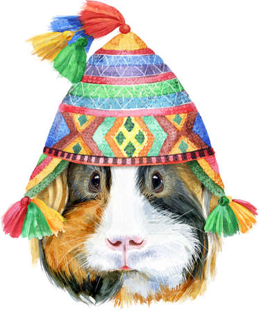 Watercolor portrait of Sheltie guinea pig in chullo hat on white background 写真素材