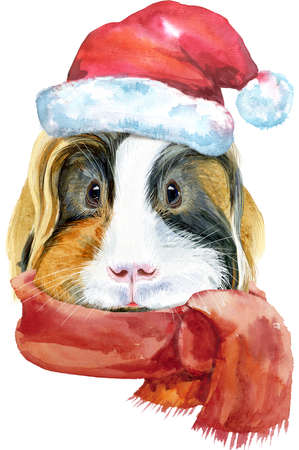 Watercolor portrait of Sheltie guinea pig with Santa hat on white background