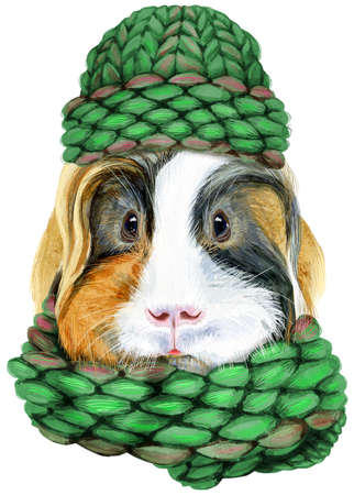 Watercolor portrait of Sheltie guinea pig pig in a knitted hat and scarf on white background