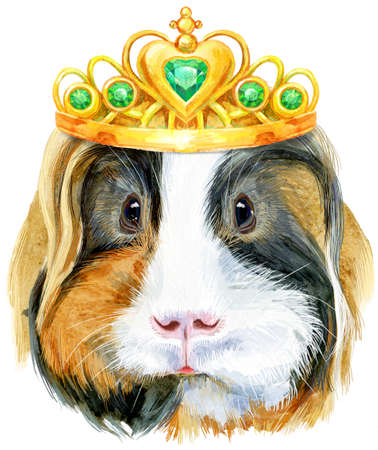 Guinea pig with golden crown. Pig for T-shirt graphics. Watercolor Sheltie guinea pig illustration