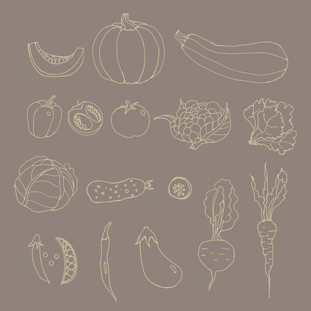 Set of line art vegetables. Cartoon. Pumpkin, zucchini, peppers, hot, chili, peas, tomato, cauliflower, cabbage, lettuce, cucumber, eggplant, beets, carrots. Hand drawing. Brawn background.