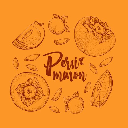 Persimmon vector drawing set. Hand drawn object with Persimmon sliced piece and seeds on orange background. Fruit sketch style illustration. Detailed vegetarian food sketch.