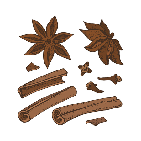 Cinnamon sticks, anise star and cloves. Vector drawing of aromatic spices set. Seasonal food illustration isolated on white. Doodle of spice and flavor. Cooking and mulled wine ingredient Vektorgrafik