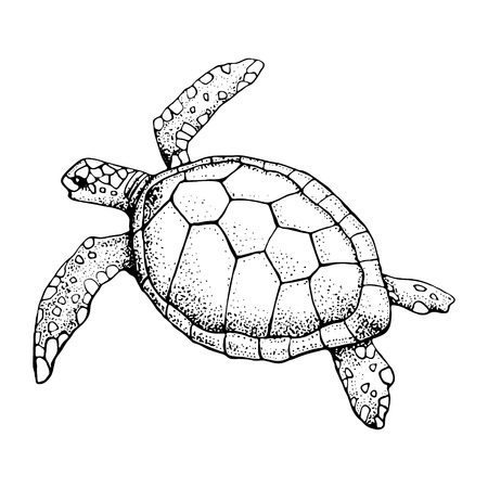 Handgezeichnete Meeresschildkröte isoliert auf weißem Hintergrund. Vektorgrafik