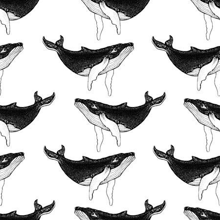 Seamless pattern with Hand drawn humpback whales. Vector with animal underwater. Illustration for wallpaper, web page background, surface textures, textile.