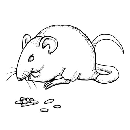Hand drawn mouse or rat eats grain. Ink drawing. Vector with mammal animal isolated on white background. Illustration for T-shirt graphics, books images, poster, textiles. Illustration