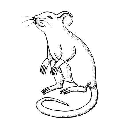 Hand drawn mouse or rat. Ink drawing. Vector with mammal animal isolated on white background. Illustration for T-shirt graphics, books images, poster, textiles. Çizim