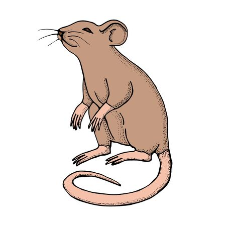 Hand drawn mouse or rat. Vector with mammal animal isolated on white background. Illustration for T-shirt graphics, books images, poster, textiles.