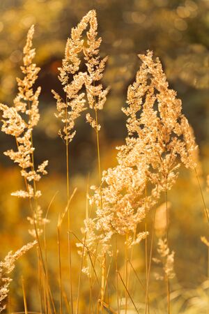 Field meadow closeup photo nature idea rich harvest. The summer sun shines over the agricultural field. Stok Fotoğraf