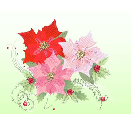 illustration  with Red Poinsettia and Mistletoe Vector