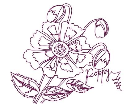 claret: illustration  with Poppy sketch white and claret Illustration