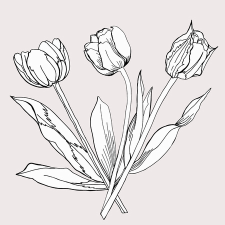 bouquet of tulip sketch black and white vector illustration royalty