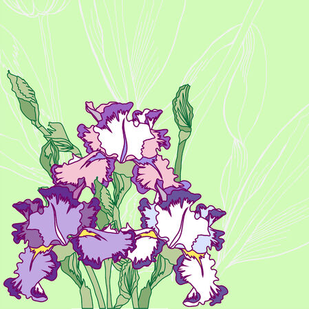 Background with blue pink irises. Vector illustration