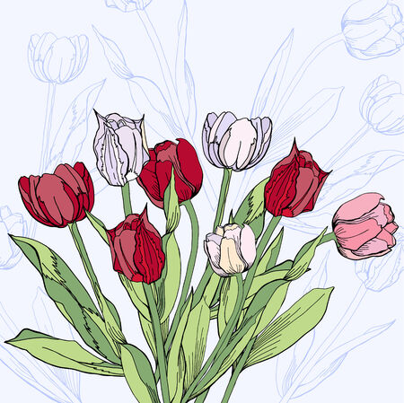 claret: Background with claret and white tulips.Vector illustration