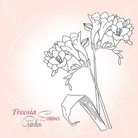 freesia: Pink background with freesia. Vector illustration Illustration