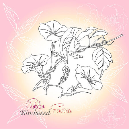 Pink background with pansies and bindweed. Raster illustration Vector