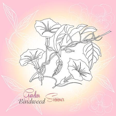 Pink background with pansies and bindweed. Raster illustration Ilustração