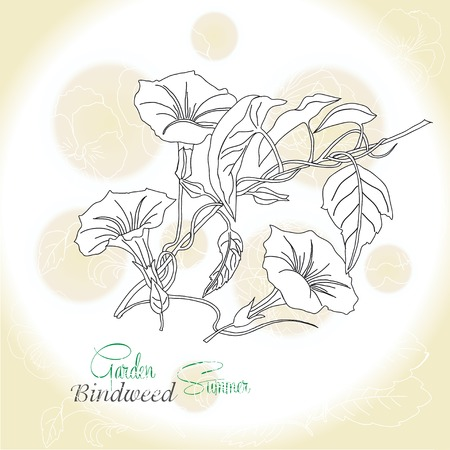 Ochre background  with  bindweed.Vector illustration Vector