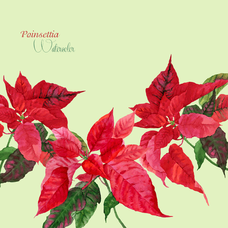 Background  with red poinsettia. Vector watercolor illustration Vector