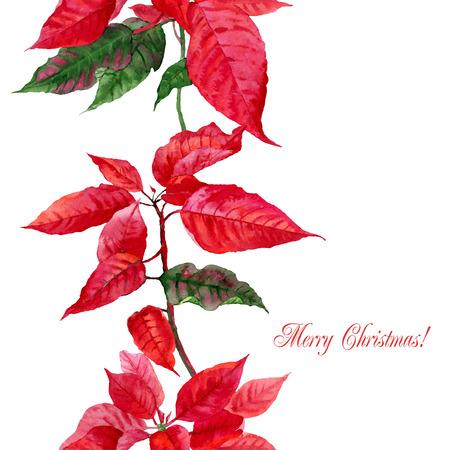 flor de pascua: Fondo con la flor de pascua roja. Vector ilustración de la acuarela