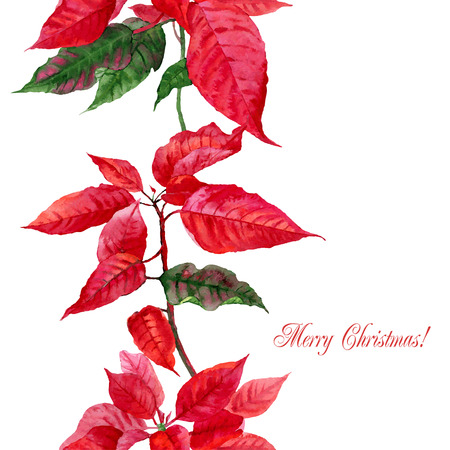 Background  with red poinsettia. Vector watercolor illustration Illustration