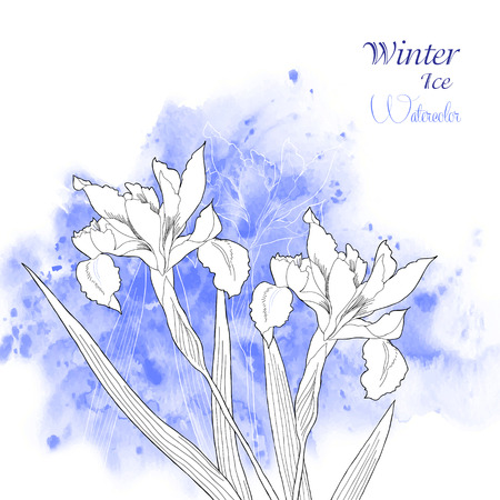 Background  with watercolors and irises flowers. Vector watercolor illustration Vector