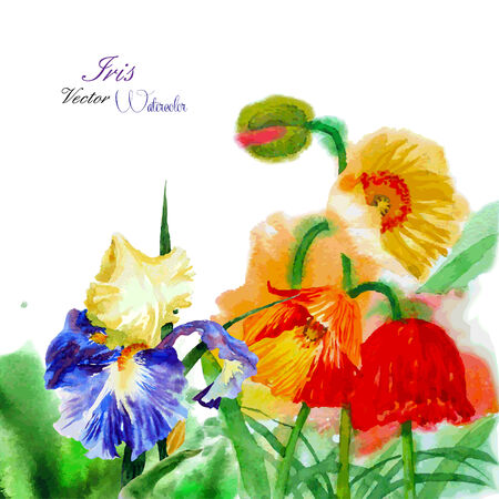 Watercolor background with poppy and flowers. Vector illustration Vector