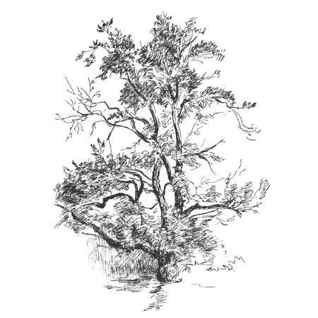 tree sketch: Tree hand drawing sketch. Vector nature illustration