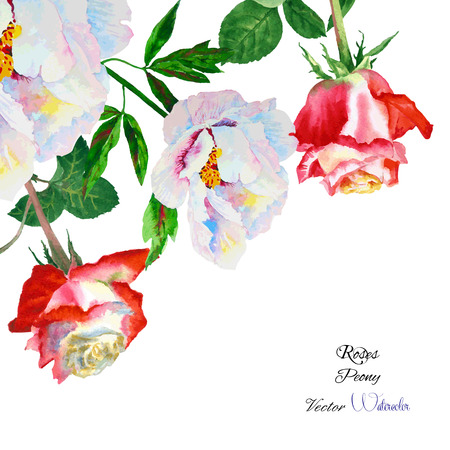Background with rose and peony.Vector watercolor illustration