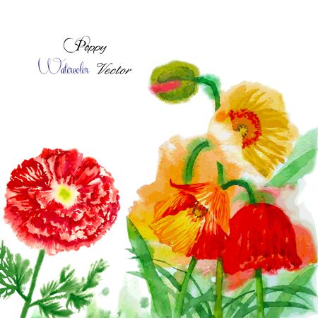 Watercolor background with red poppy. Vector illustration Vector