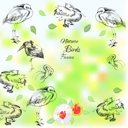 Background with birds.Vector  nature Illustration Vector