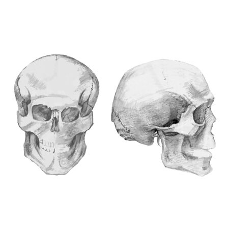 automaton: Drawing skulls and bones. Vector Illustration