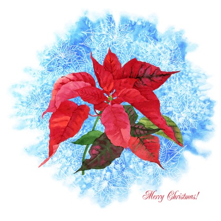 poinsettia: Background  with Christmas poinsettia. Vector watercolor illustration Illustration