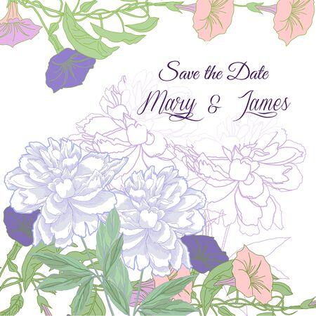 bindweed: Wedding background with bindweed and white peonies.Vector illustration Illustration