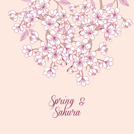 botanical garden: Background with sakura. Hand drawn spring blossom trees. Vector illustration with cherry blossoms. Illustration