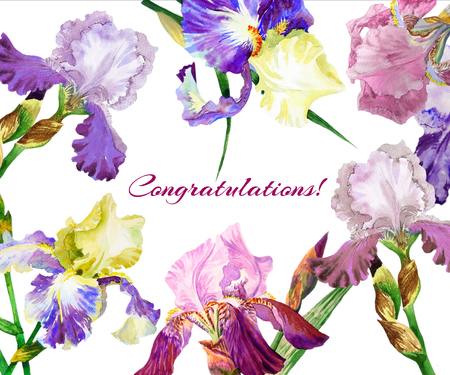 Colored irises. Hand painted watercolor flowers. Botanical elements for illustrations and greeting cards